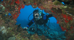 Scuba Dive Lanai Lava Tubes with top Maui Dive Shop